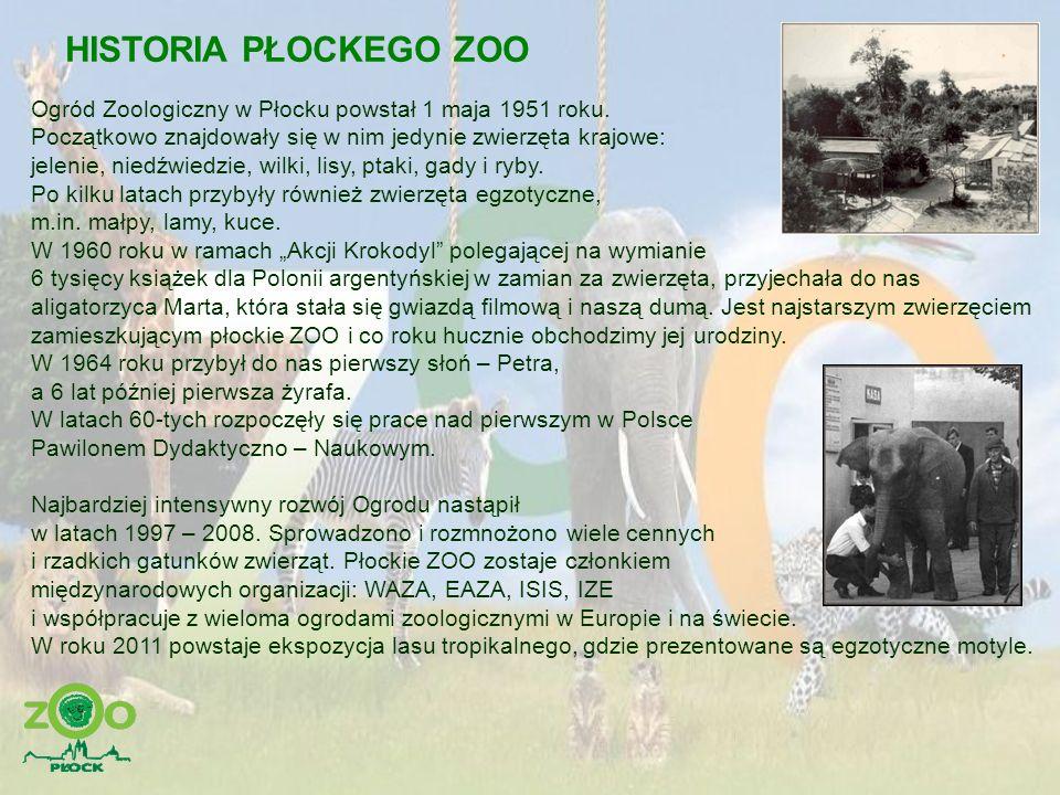 HISTORIA PŁOCKEGO ZOO Ogród Zoologiczny w Płocku powstał 1 maja 1951 roku. Początkowo znajdowały się w nim jedynie zwierzęta krajowe: