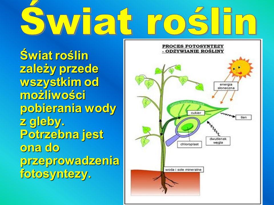 Świat roślin Świat roślin zależy przede wszystkim od możliwości pobierania wody z gleby.