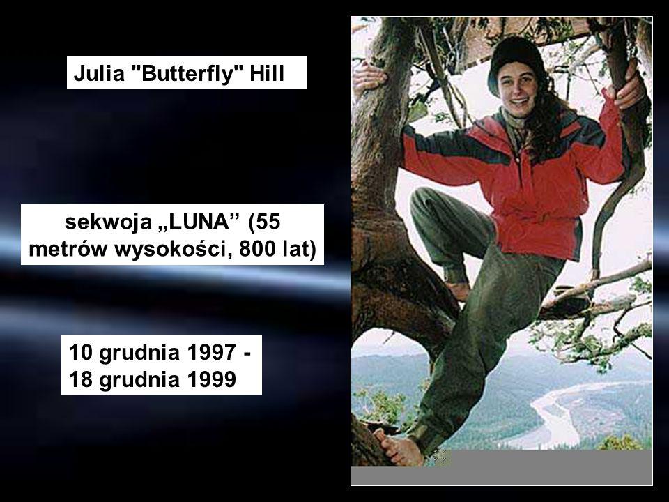 """sekwoja """"LUNA (55 metrów wysokości, 800 lat)"""