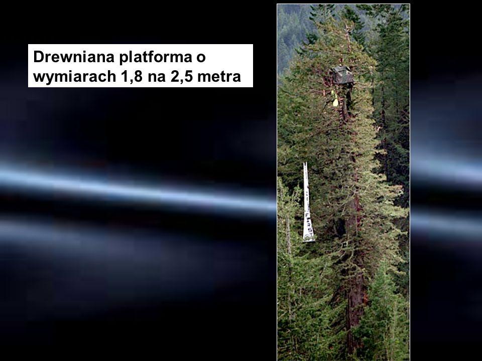Drewniana platforma o wymiarach 1,8 na 2,5 metra