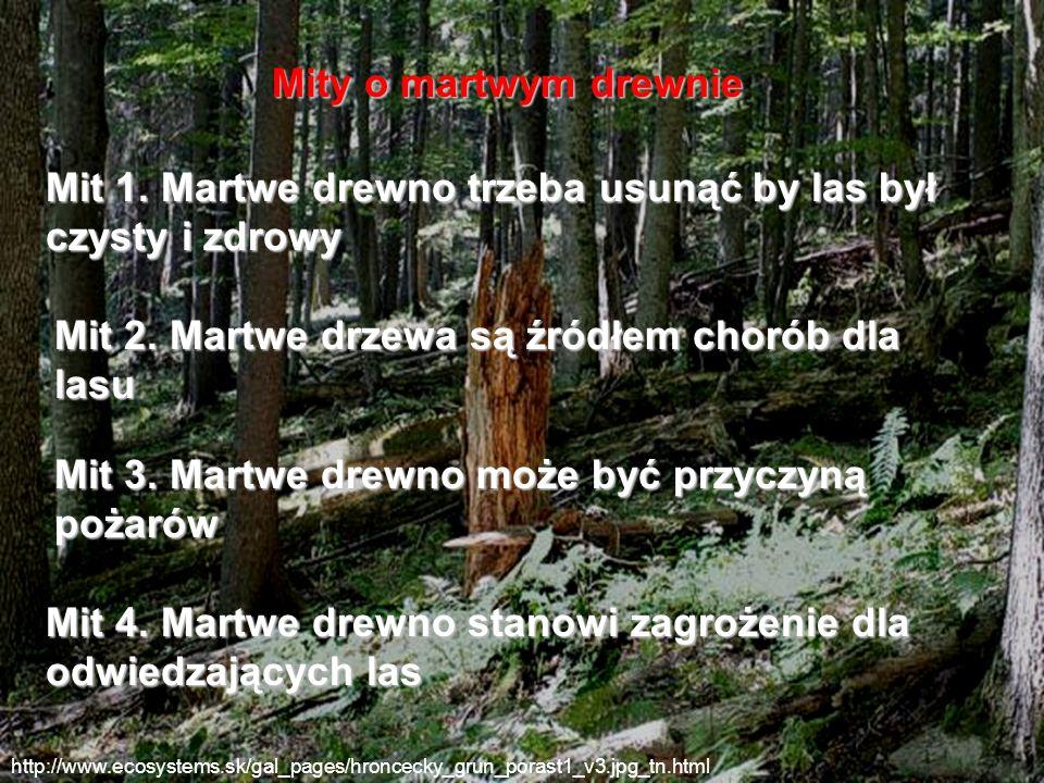 Mit 1. Martwe drewno trzeba usunąć by las był czysty i zdrowy