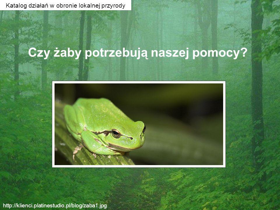 Czy żaby potrzebują naszej pomocy