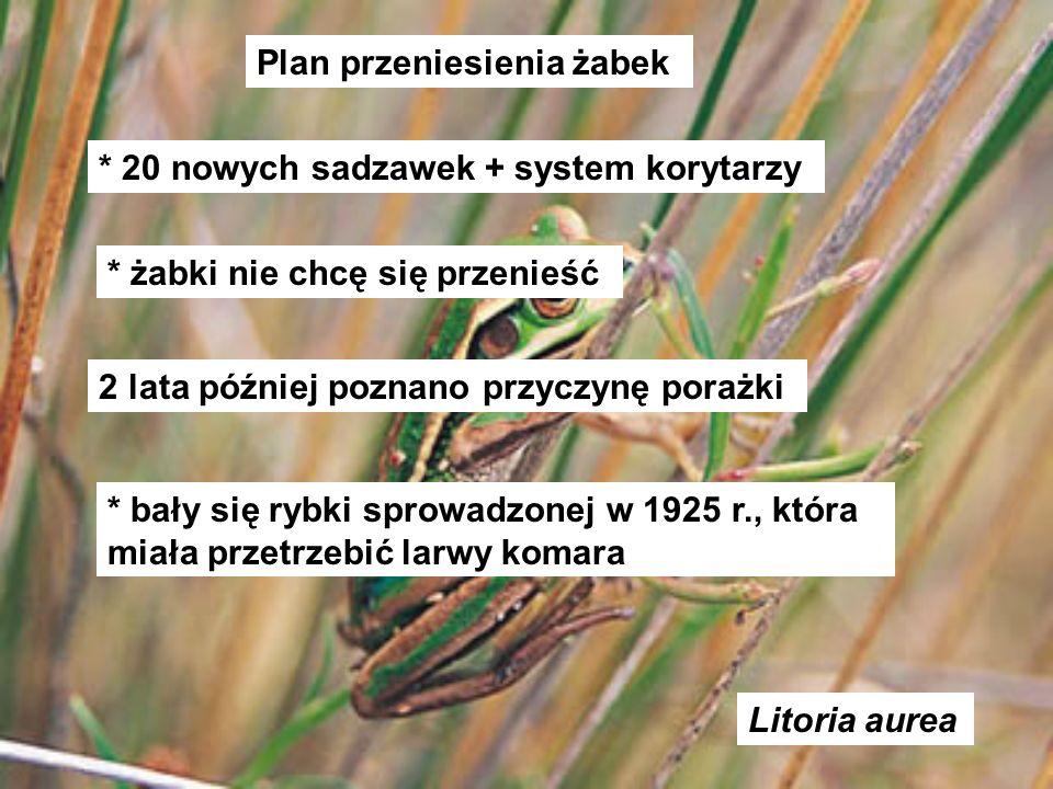 Plan przeniesienia żabek