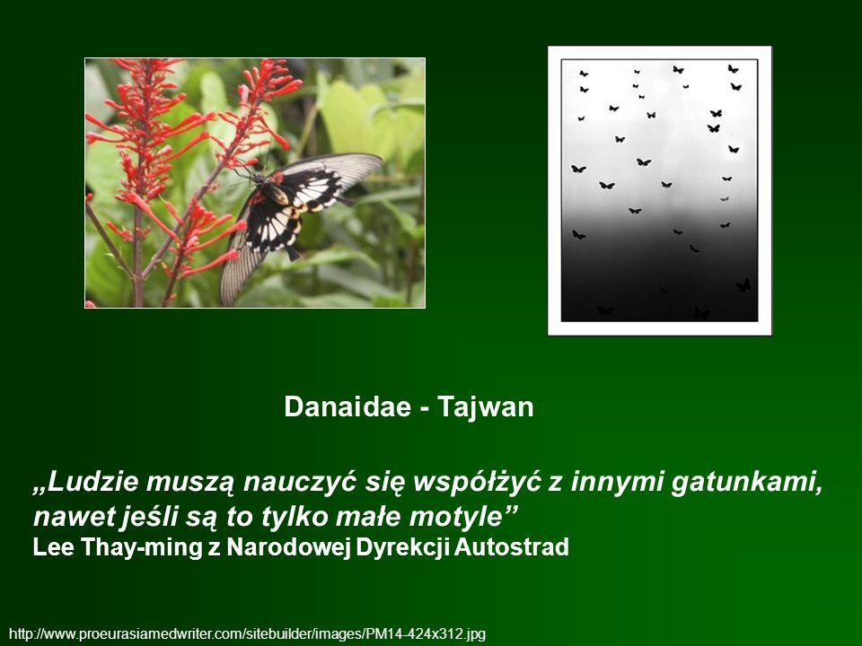 """Danaidae - Tajwan """"Ludzie muszą nauczyć się współżyć z innymi gatunkami, nawet jeśli są to tylko małe motyle"""