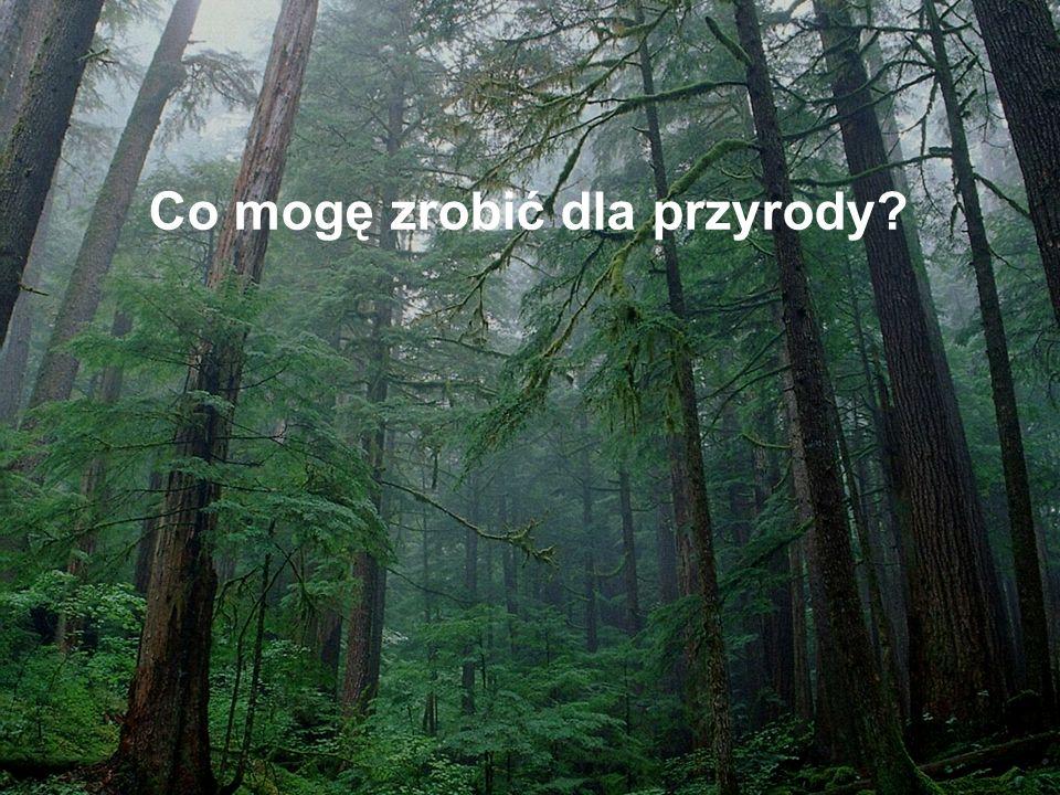 Co mogę zrobić dla przyrody
