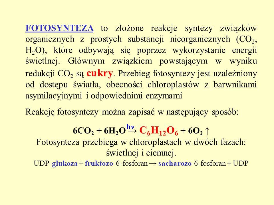 UDP-glukoza + fruktozo-6-fosforan → sacharozo-6-fosforan + UDP