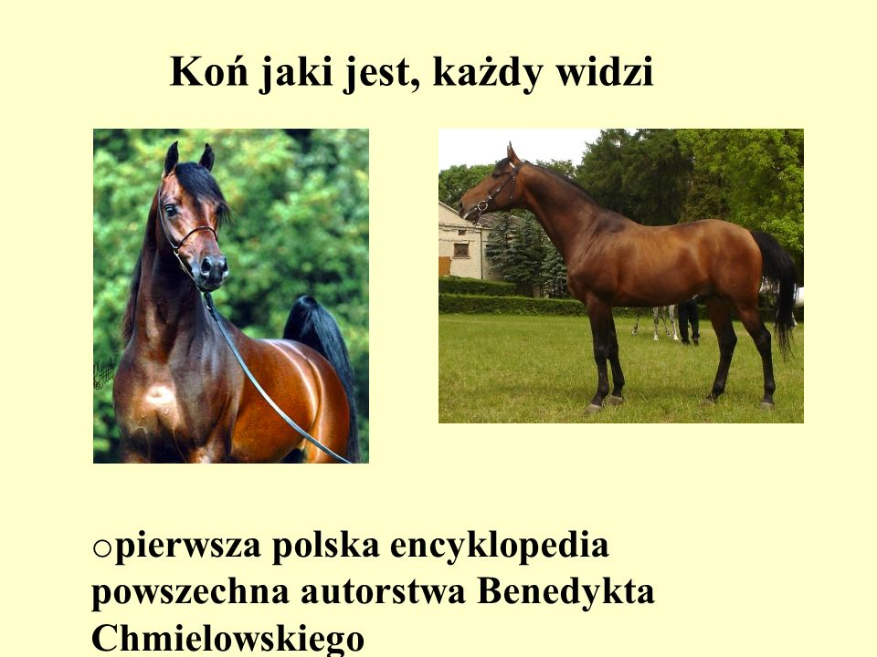Koń jaki jest, każdy widzi