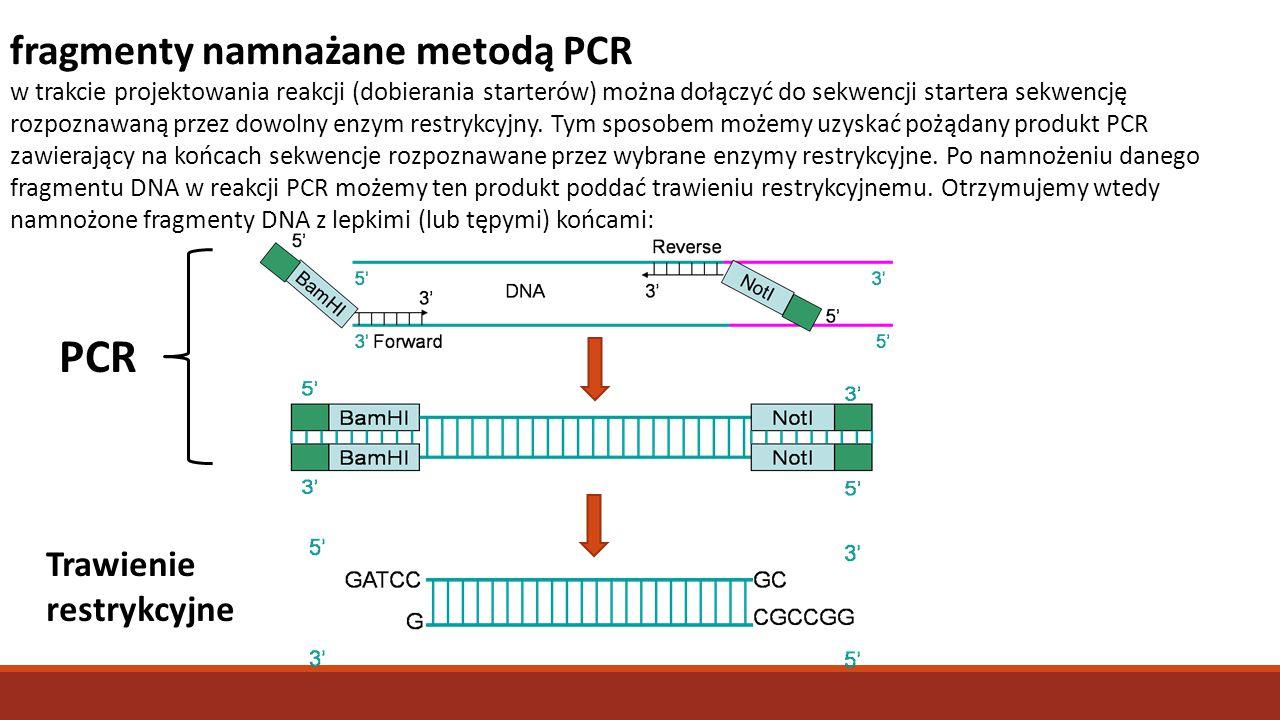 PCR fragmenty namnażane metodą PCR Trawienie restrykcyjne