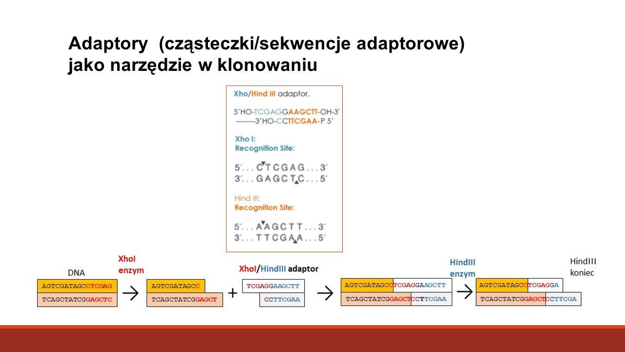 Adaptory (cząsteczki/sekwencje adaptorowe) jako narzędzie w klonowaniu