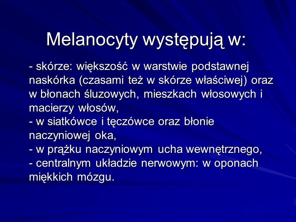 Melanocyty występują w: