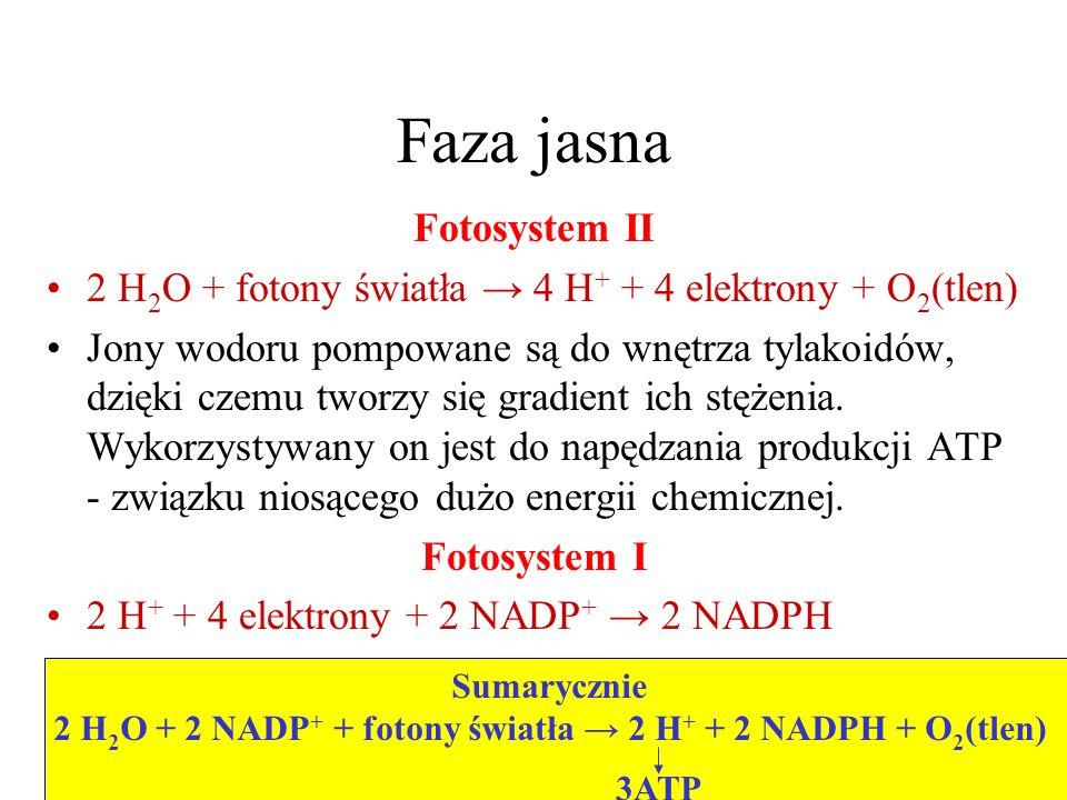 2 H2O + 2 NADP+ + fotony światła → 2 H+ + 2 NADPH + O2(tlen)