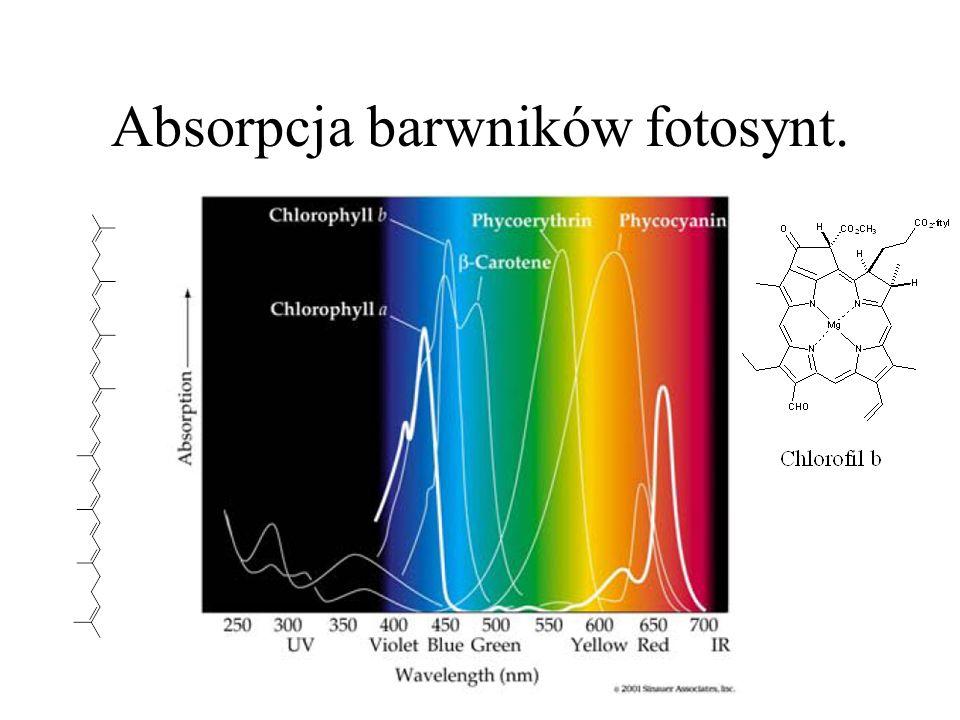 Absorpcja barwników fotosynt.