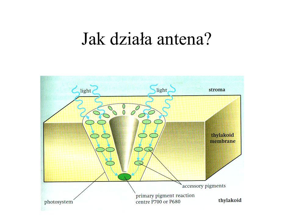 Jak działa antena