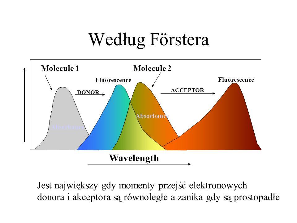 Według Förstera Wavelength