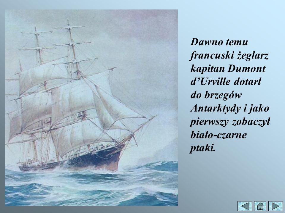 Dawno temu francuski żeglarz kapitan Dumont d'Urville dotarł do brzegów Antarktydy i jako pierwszy zobaczył biało-czarne ptaki.