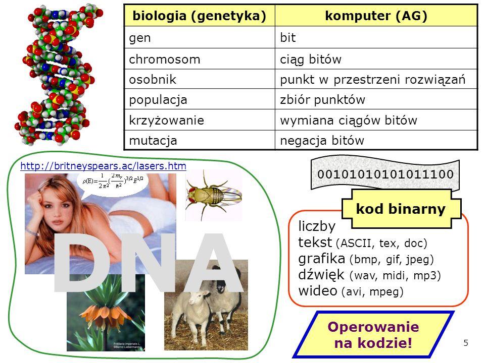 biologia (genetyka) komputer (AG) gen. bit. chromosom. ciąg bitów. osobnik. punkt w przestrzeni rozwiązań.