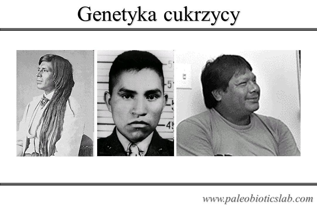 Genetyka cukrzycy www.paleobioticslab.com