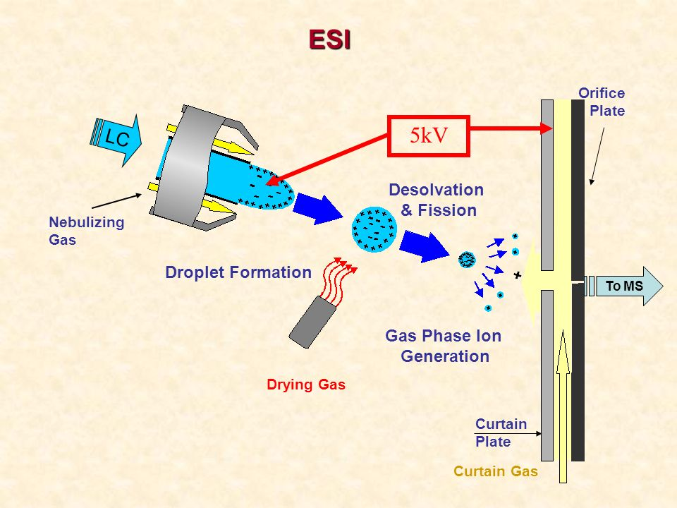 ESI 5kV LC Desolvation & Fission Droplet Formation Gas Phase Ion