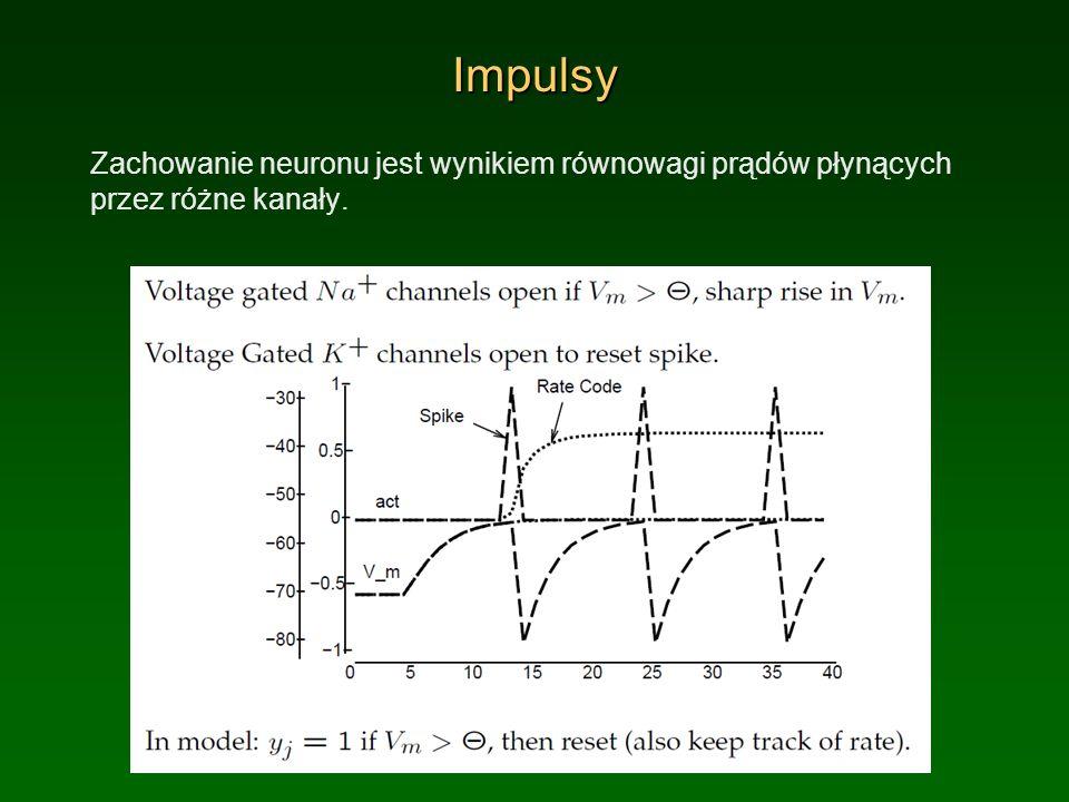 ImpulsyZachowanie neuronu jest wynikiem równowagi prądów płynących przez różne kanały.