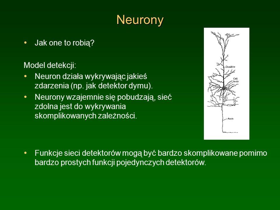 Neurony Jak one to robią Model detekcji: