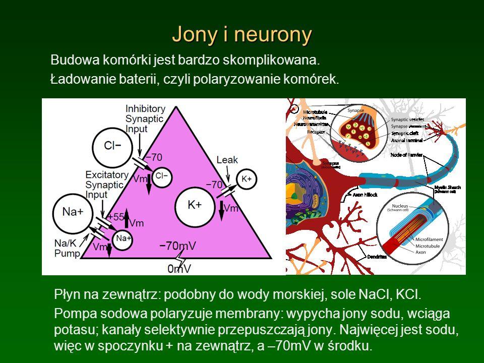 Jony i neurony Budowa komórki jest bardzo skomplikowana.