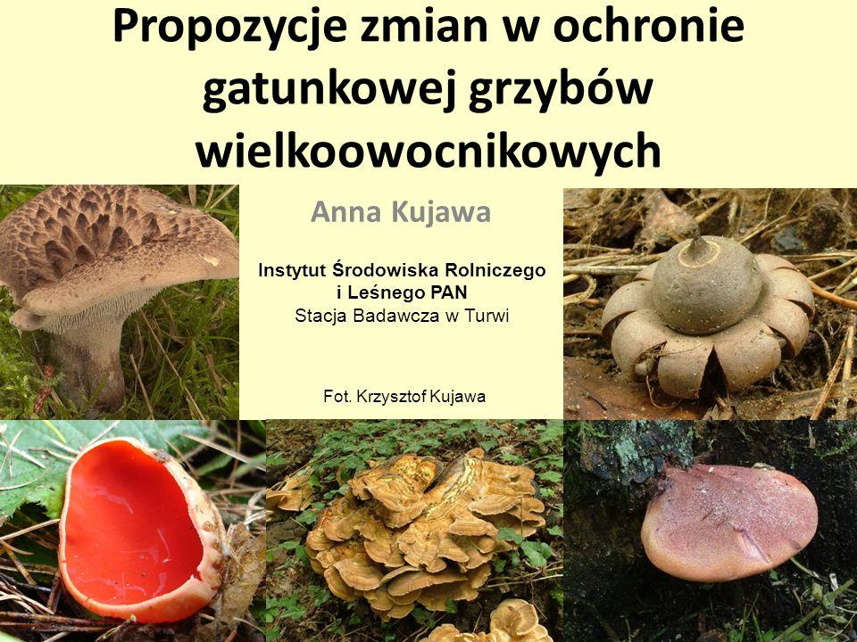 Propozycje zmian w ochronie gatunkowej grzybów wielkoowocnikowych