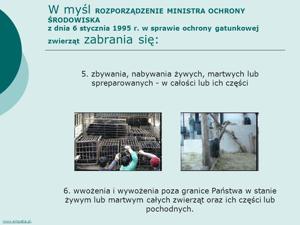 W myśl ROZPORZĄDZENIE MINISTRA OCHRONY ŚRODOWISKA z dnia 6 stycznia 1995 r. w sprawie ochrony gatunkowej zwierząt zabrania się: