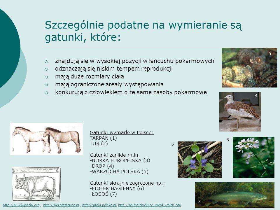 Szczególnie podatne na wymieranie są gatunki, które: