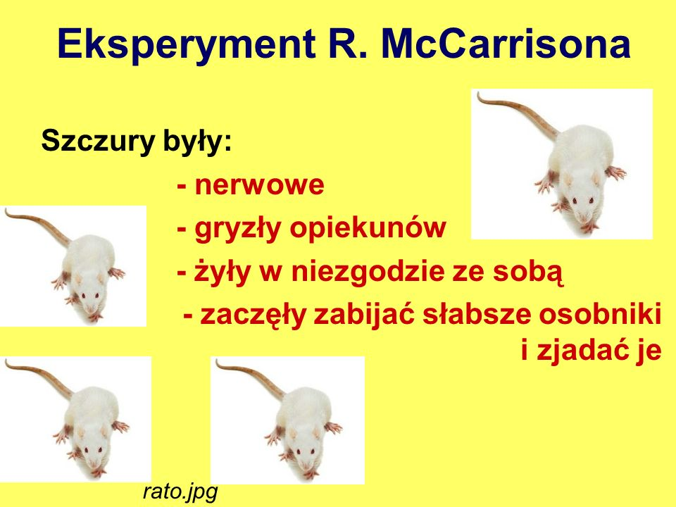 Eksperyment R. McCarrisona