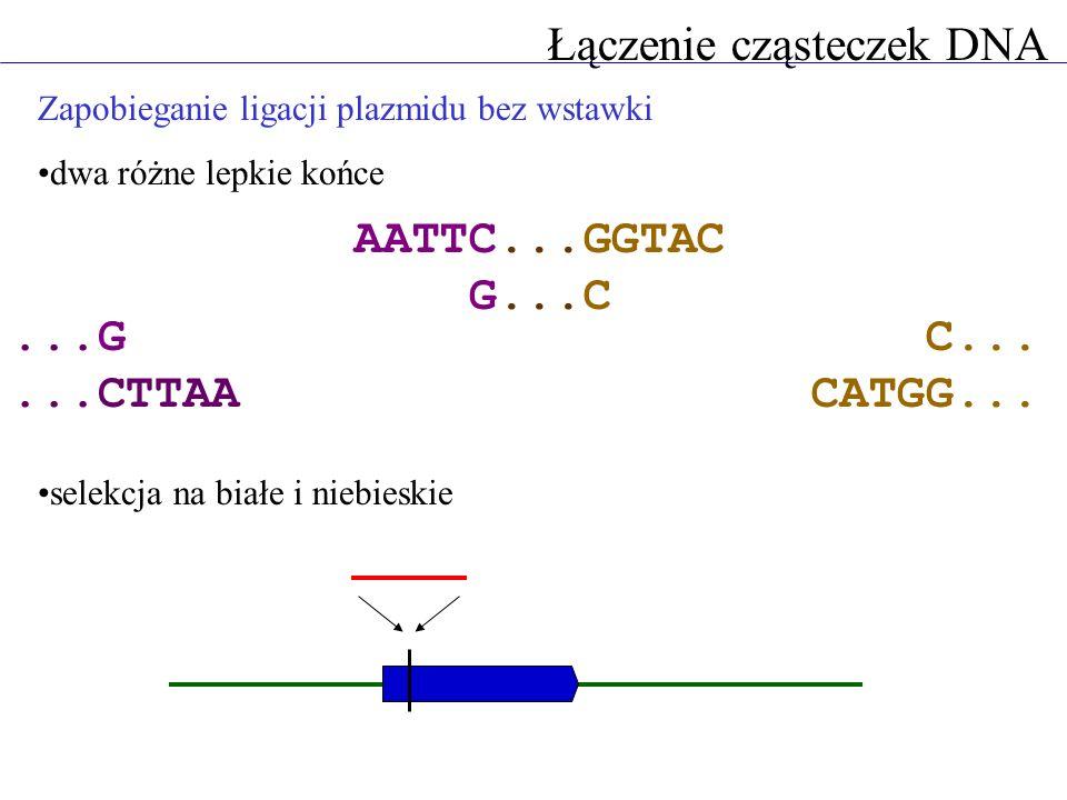Łączenie cząsteczek DNA