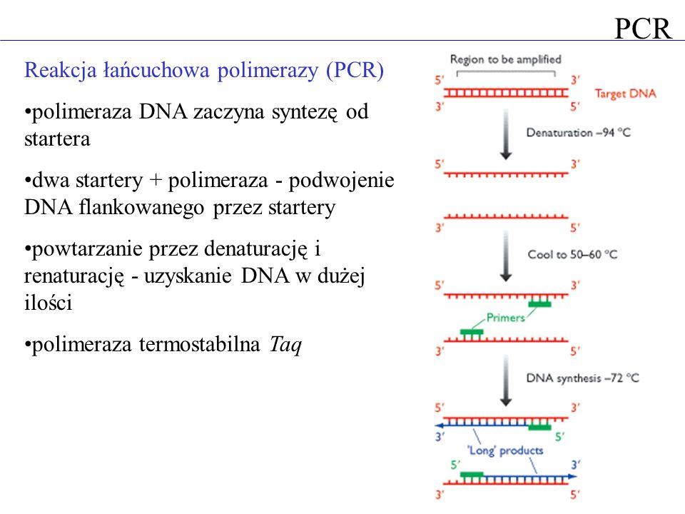 PCR Reakcja łańcuchowa polimerazy (PCR)