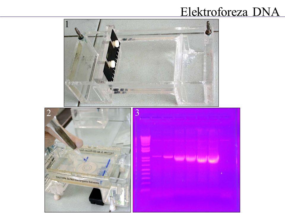Elektroforeza DNA 1 2 3