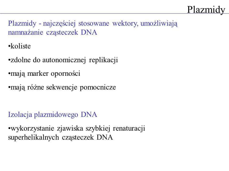 Plazmidy Plazmidy - najczęściej stosowane wektory, umożliwiają namnażanie cząsteczek DNA. koliste.