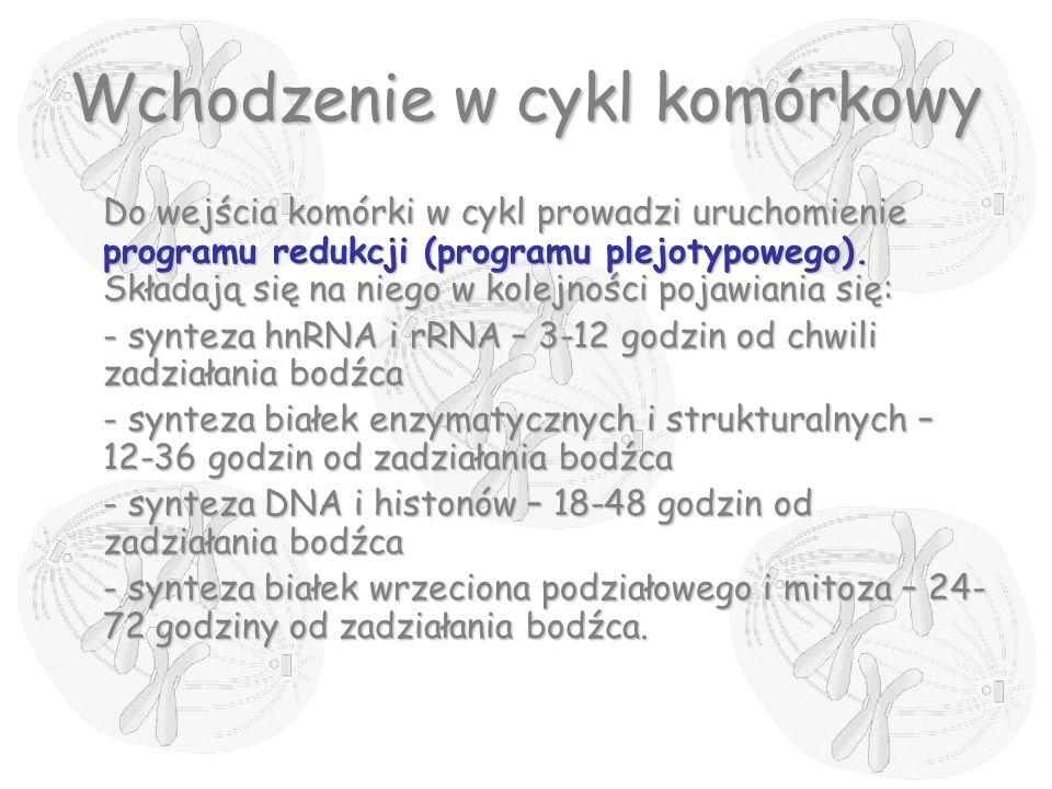 Wchodzenie w cykl komórkowy