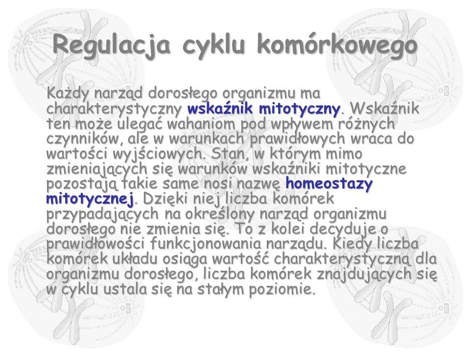 Regulacja cyklu komórkowego