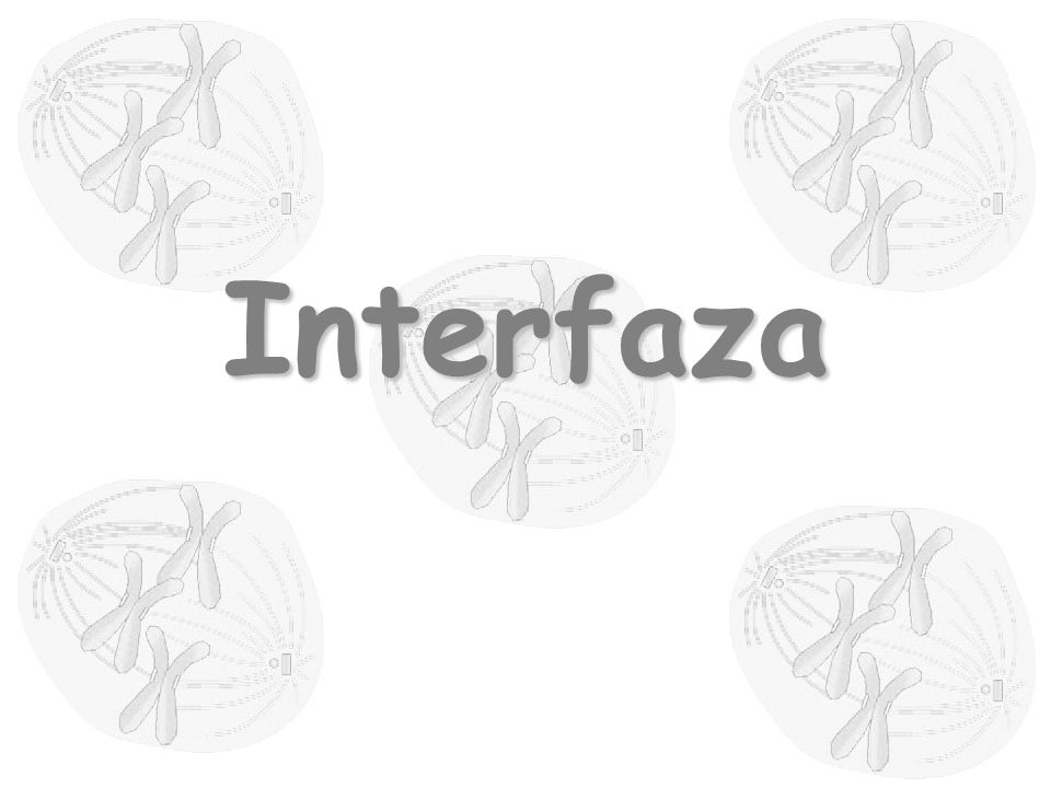 Interfaza