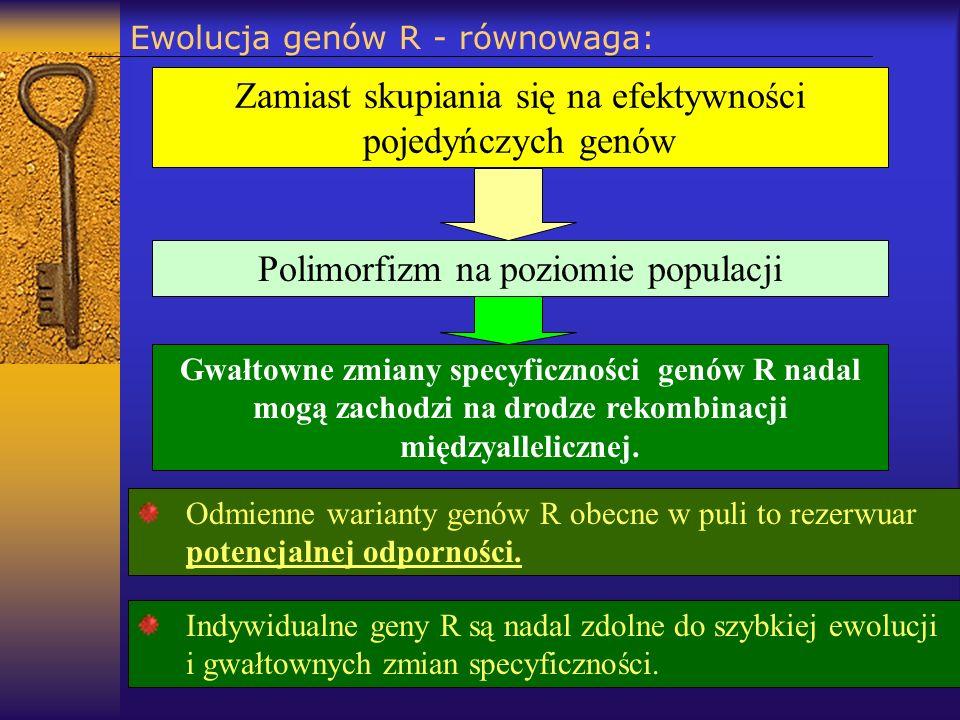 Ewolucja genów R - równowaga: