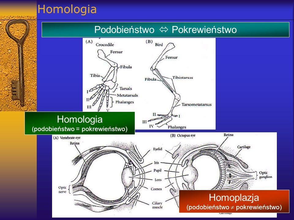 Homologia Podobieństwo  Pokrewieństwo Homologia Homoplazja