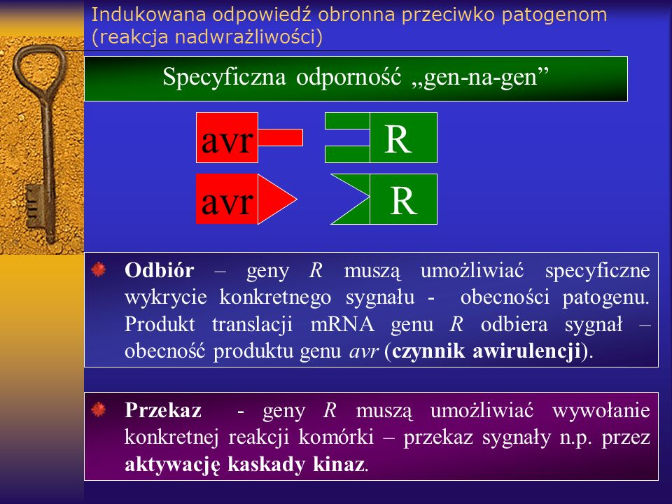 """Specyficzna odporność """"gen-na-gen"""