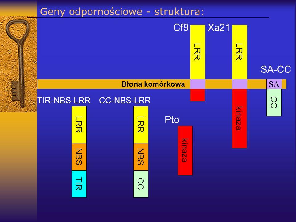 Geny odpornościowe - struktura: