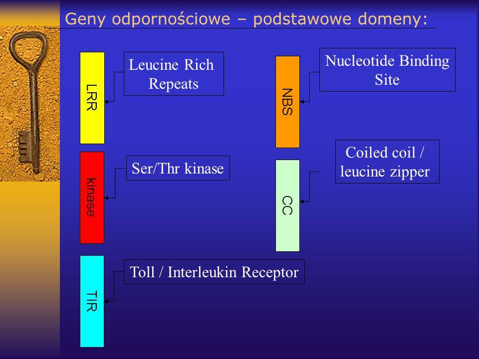 Geny odpornościowe – podstawowe domeny: