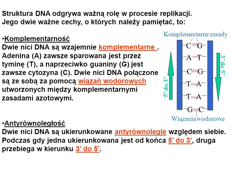 Struktura DNA odgrywa ważną rolę w procesie replikacji.