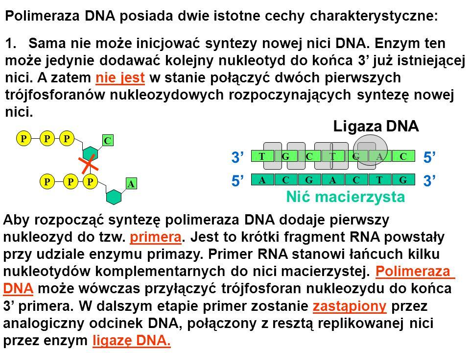 Ligaza DNA RNA Primer 5' 3' 3' 5' Nić macierzysta