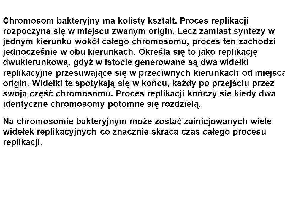 Chromosom bakteryjny ma kolisty kształt. Proces replikacji