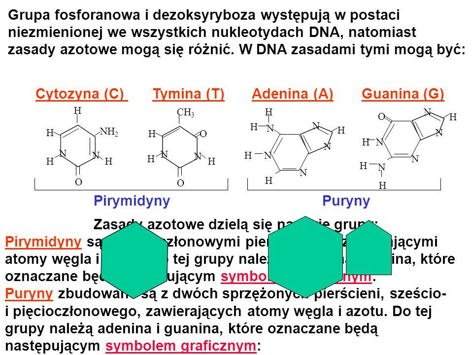 Cytozyna (C) Tymina (T) Adenina (A) Guanina (G)