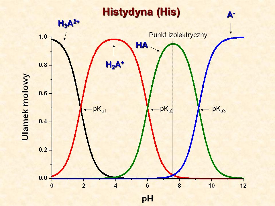 Histydyna (His) A- H3A2+ Punkt izolektryczny HA H2A+ pKa1 pKa2 pKa3