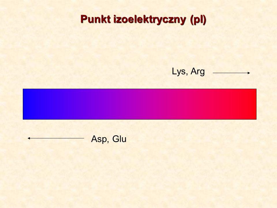 Punkt izoelektryczny (pI)