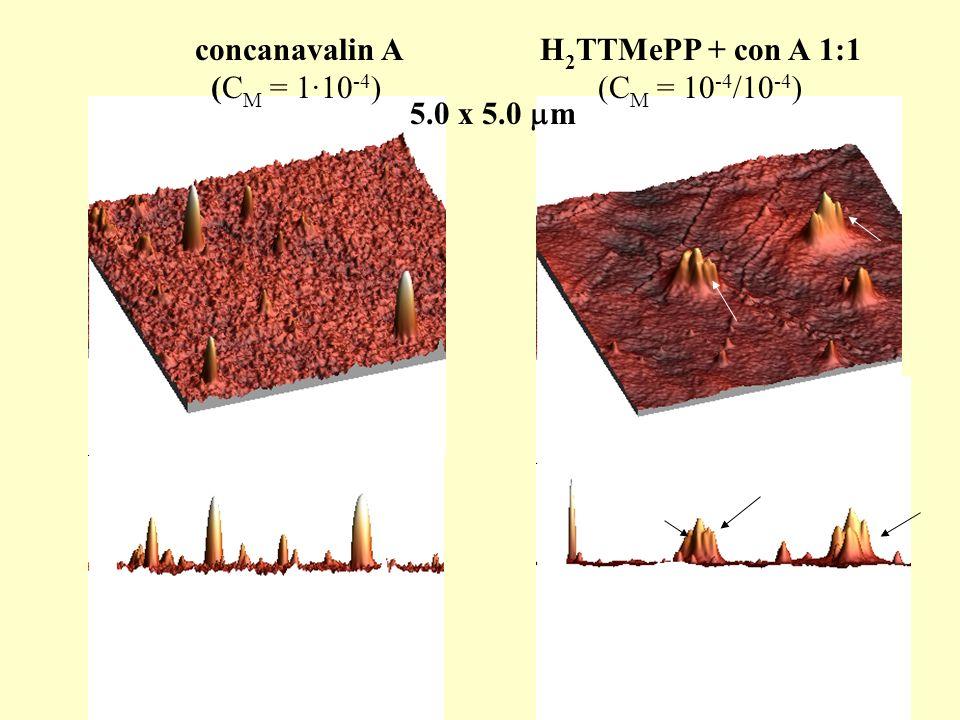 concanavalin A (CM = 1·10-4) H2TTMePP + con A 1:1 (CM = 10-4/10-4) 5.0 x 5.0 m