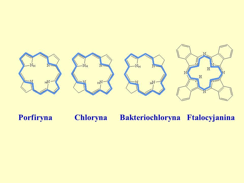 Porfiryna Chloryna Bakteriochloryna Ftalocyjanina