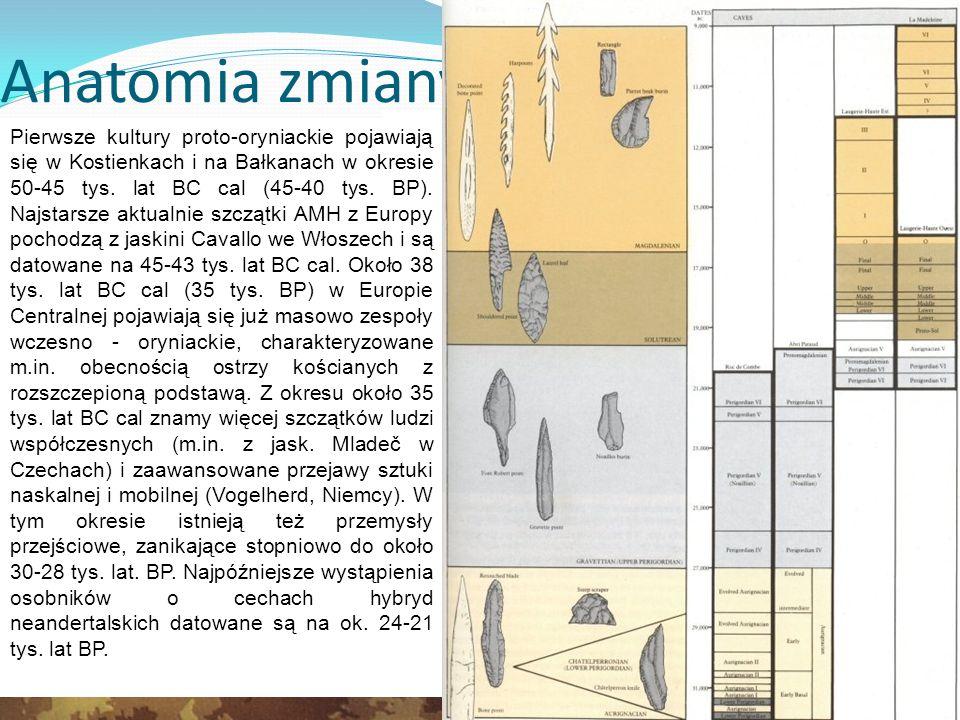 Anatomia zmiany Czaszka z jaskini Border w RPA pochodzi z okresu, w którym przedstawiciele AMH stanowili niewielką populację afrykańską.